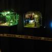 Julia Murakami | Anatomy of a fairy tale (installation view)
